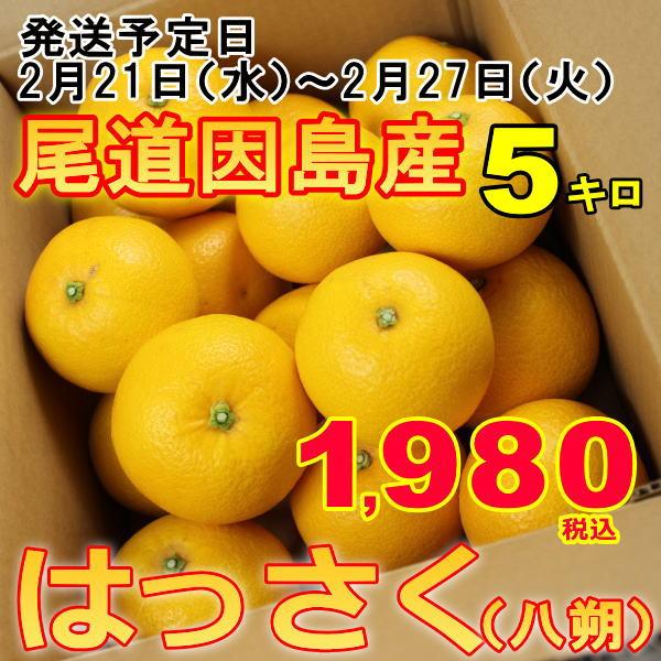 訳あり 八朔 はっさく 産地 瀬戸内 しまなみ海道 広島県 尾道市因島 約5kg はっさく