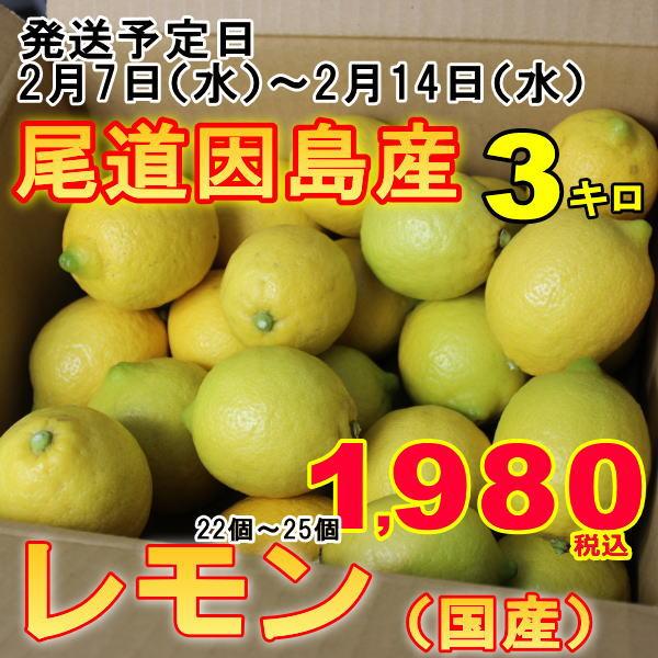 訳あり レモン 産地 瀬戸内 しまなみ海道 広島県 尾道市因島 約3kg レモン