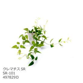 あす楽 光触媒 インテリアグリーン クレマチスSR SR-101 497829D 観葉植物 造花 人工 フェイクグリーン