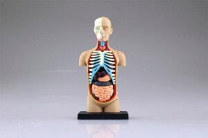 立体パズル 4D VISION 人体解剖 No.01 胴体解剖モデル