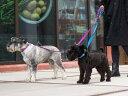 リード ドッグコペンハーゲン DOG Copenhagen アーバンフリースタイルリーシュ S/Lサイズ 全8色 【ペット】 【お散歩…