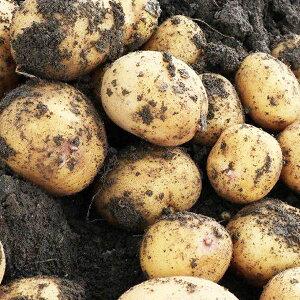 九州産 じゃがいも 5キログラム ジャガイモ 馬鈴薯 ばれいしょ 長崎県 熊本県 鹿児島県 / 2Lサイズ 大容量 ご家庭用 サイズ 品種お任せ / 新鮮 野菜 使いやすさ抜群 / じゃがバター コロッケ フ