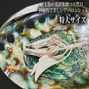 【特大サイズ】アバロンシェル(アワビ貝) アバロ二シェル レインボーカラーアバロンシェル 天然貝 セージ香皿 浄化皿…