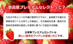 3L以上の大粒イチゴ