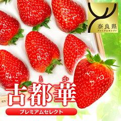 最高級のイチゴ