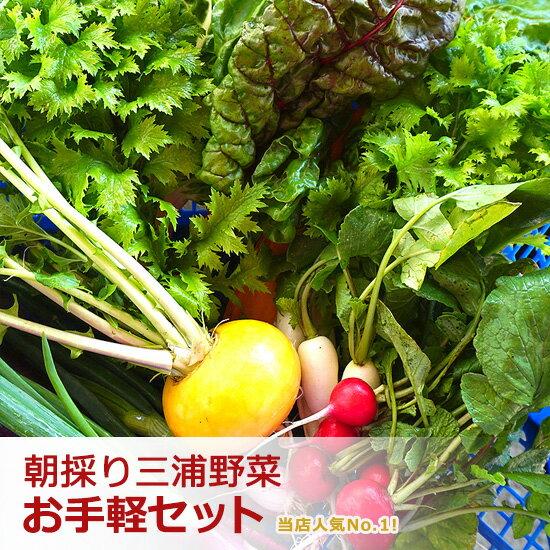 【送料無料!】朝採り 新鮮野菜 セット 旬の三浦野菜お試しセット