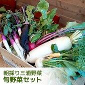 朝採り!旬の三浦野菜セット