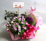 【鉢花】【長崎バウムクーヘン】花鉢とスイーツ