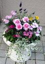 母の日の寄せ植え【母の日】【鉢花】