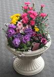 【母の日】【鉢花】母の日の寄せ植え