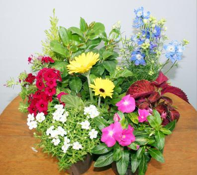 【鉢花】季節の寄せ植え・苗セット