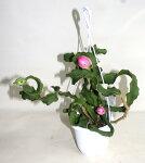 ドラゴンボールミニ観賞用サボテン科花苗鉢花多肉植物寄せ植えあす楽