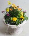 季節の寄せ植えW あす楽 鉢花 寄せ植え フラワーギフト 誕生日 お祝い 開店祝いバレンタインデー ホワイトデー 発表会ベランダ 玄関【…