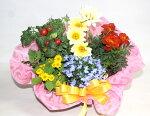 季節の寄せ鉢・ギフトセット【あす楽】【鉢花】フラワーギフト花の贈り物誕生日お祝い開店祝いお中元出産祝内祝いプレゼント【送料無料】