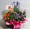 季節の寄せ鉢・ギフトセット【あす楽】【鉢花】フラワーギフト 花の贈り物 誕生日 お祝い 開店祝い お中元 出産祝 内祝い プレゼント…
