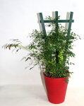 花鉢ミニバラのフェンス仕立てバラミニチュア系ツルバラ須磨