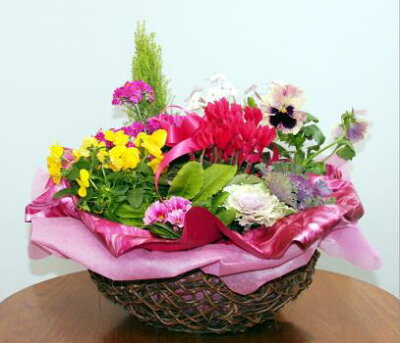 【鉢花】季節の寄せ植え・苗セット−ギフト仕様