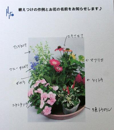 【鉢花】季節の寄せ植え・苗セット【送料無料】