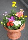 季節の寄せ植えB【鉢花】【あす楽】