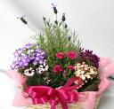 季節の寄せ鉢・ギフトセット【あす楽】【鉢花】