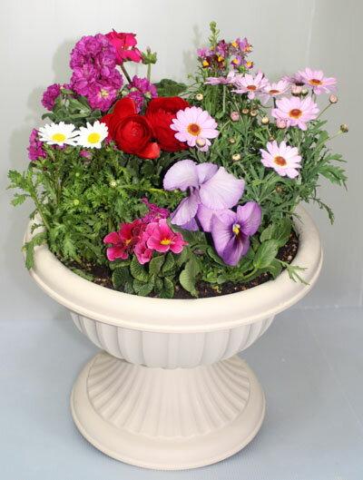 【鉢花】季節の寄せ植えW