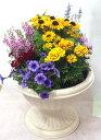 季節の寄せ植えW 【あす楽】【鉢花】