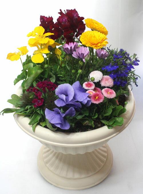 季節の寄せ植えW あす楽 鉢花 寄せ植え ギフト 誕生日 お祝い 開店祝い 発表会 父の日 遅れてごめんね 母の日