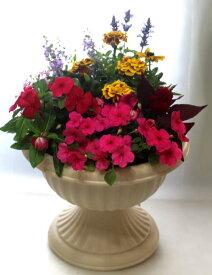 季節の寄せ植えW あす楽 鉢花 寄せ植え フラワーギフト 誕生日 お祝い 開店祝い 発表会ベランダ 玄関