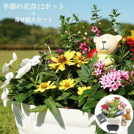 花苗 冬 寄せ植え セット ガーデニングに最適です♪ 季節の花苗おまかせ12ポット+寄せ植えセット 送料無料 沖縄・離島を除く