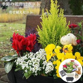 花苗 夏 寄せ植え セット ガーデニングに最適です♪ 季節の花苗おまかせ12ポット+寄せ植えセット 送料無料 沖縄・離島を除く