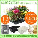 季節の花苗12ポット+寄せ植えセット【送料無料/元気でフレッシュな苗】
