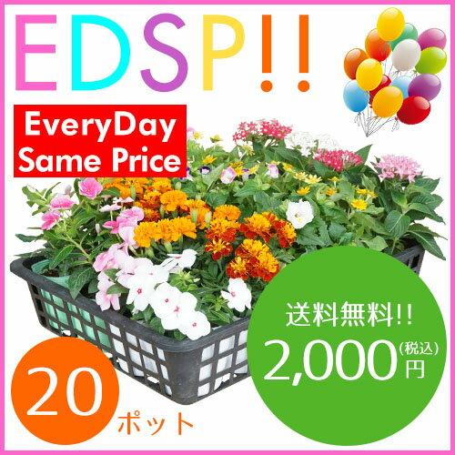 【送料無料!!】季節の花苗20ポット 夏セット(5種類 x 各4ポット)がいつでもこの価格です!色々なアレンジでお花のガーデンを造れます♪【Everyday Same Price!!毎日がお買い得♪】