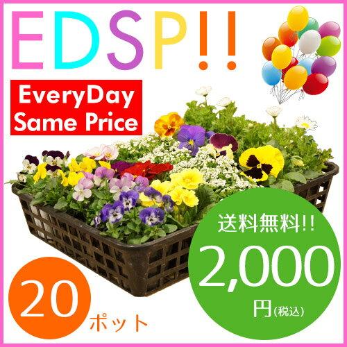 【送料無料!!】季節の花苗20ポット セット(5種類 x 各4ポット)がいつでもこの価格です!色々なアレンジでお花のガーデンを造れます♪【Everyday Same Price!!毎日がお買い得♪】