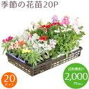 【送料無料!!】季節の花苗20ポット 秋冬セット(5種類 x 各4ポット)がいつでもこの価格です!色々なアレンジでお花のガーデンを造れます♪【Everyday ...