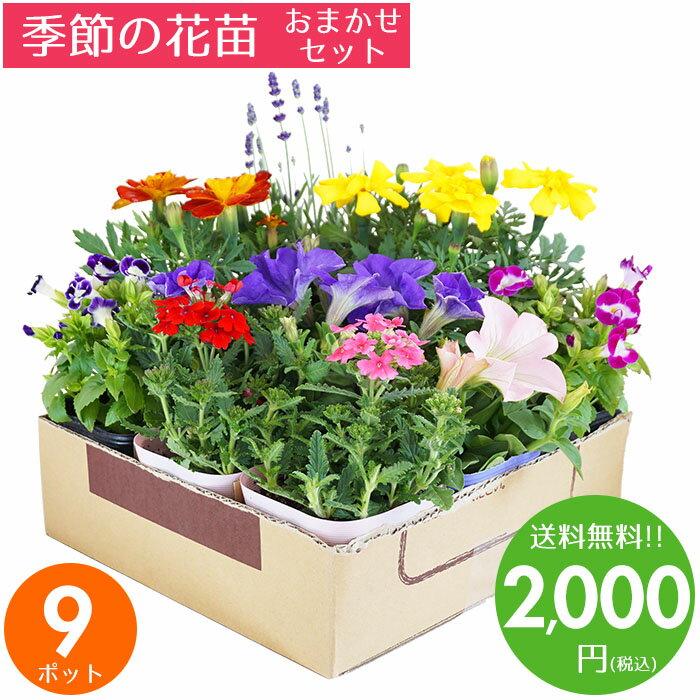 花苗 セット 送料無料 春のお花おまかせ9ポット ガーデニングに最適です♪ 父の日にもどうぞ♪ 沖縄・離島を除く