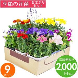 花苗 セット 送料無料 春のお花おまかせ9ポット ガーデニングに最適です♪ 沖縄・離島を除く