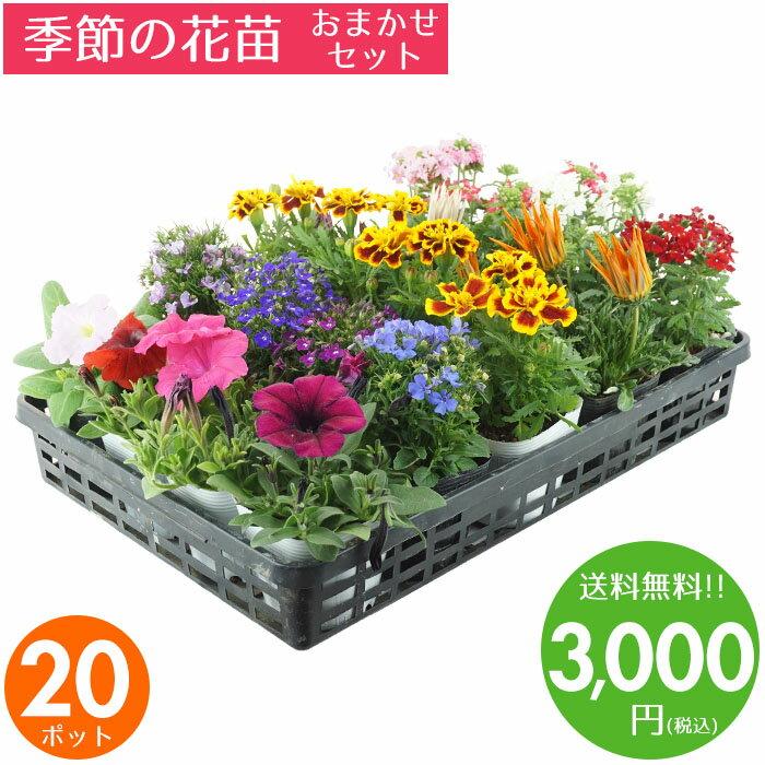 花苗 セット 送料無料 春のお花おまかせ20ポット ガーデニングに最適です♪ 父の日にもどうぞ♪ 沖縄・離島を除く