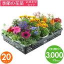 花苗 セット 送料無料 秋のお花おまかせ20ポット ガーデニングに最適です♪沖縄・離島を除く