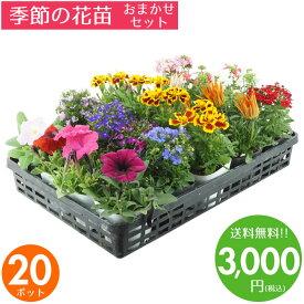 花苗 セット 送料無料 秋 冬のお花おまかせ20ポット ガーデニングに最適です♪沖縄・離島を除く
