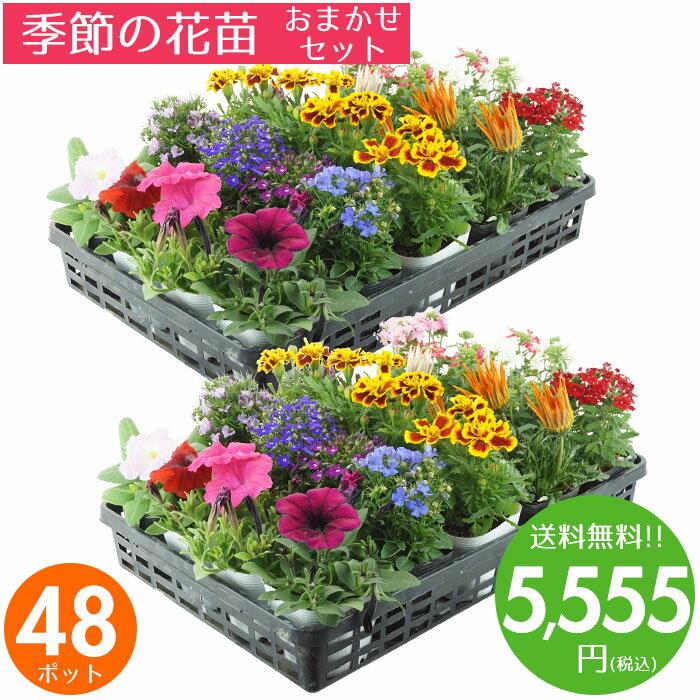 花苗 セット 送料無料 春のお花おまかせ48ポット ガーデニングに最適です♪ 父の日にもどうぞ♪ 沖縄・離島を除く