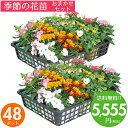 花苗 セット 送料無料 秋 のお花おまかせ48ポット ガーデニングに最適です♪沖縄・離島を除く