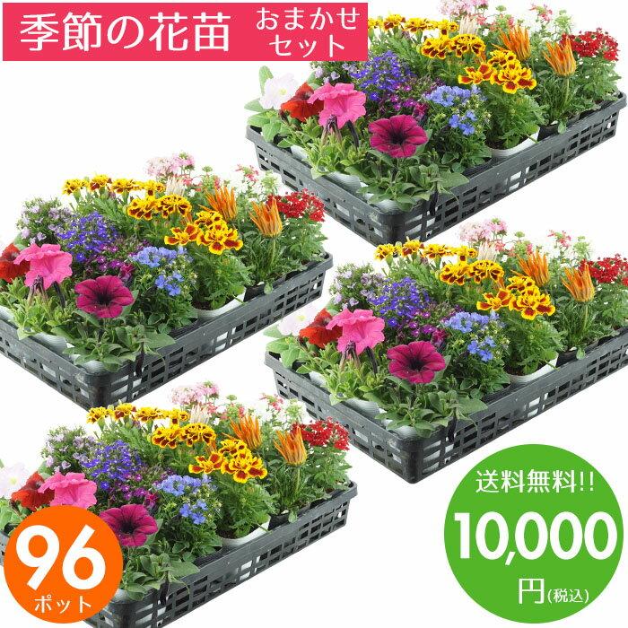 花苗 セット 送料無料 春のお花おまかせ96ポット ガーデニングに最適です♪ 父の日にもどうぞ♪ 沖縄・離島を除く