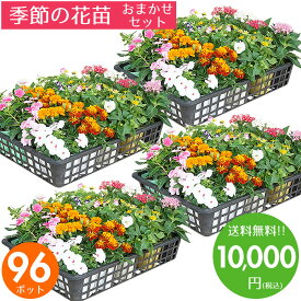 花苗 セット 送料無料 秋 冬のお花おまかせ96ポット ガーデニングに最適です♪沖縄・離島を除く