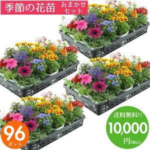 花苗 セット 送料無料 夏 のお花おまかせ96ポット ガーデニングに最適です♪沖縄・離島を除く
