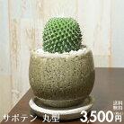 【送料無料】サボテン丸型陶器鉢入りインテリアに最適な観葉植物ギフトにも♪