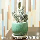 【送料無料】サボテンうちわ陶器鉢入りインテリアに最適な観葉植物ギフトにも♪