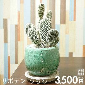 送料無料 観葉植物 小型 サボテンうちわ オシャレな陶器鉢入り インテリアに最適な観葉植物 敬老 ギフトにも♪