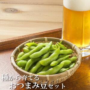 野菜の種 種から育てる おつまみ豆セット 1000円 ポッキリ 送料無料 サカタのタネ
