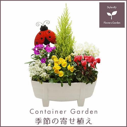【送料無料】季節の寄せ植え「秋」タル型鉢 白 ★ ギフトにも最適な季節のお花を寄せ植えに♪ 【プレゼント ブリキピック 玄関 ベランダ】