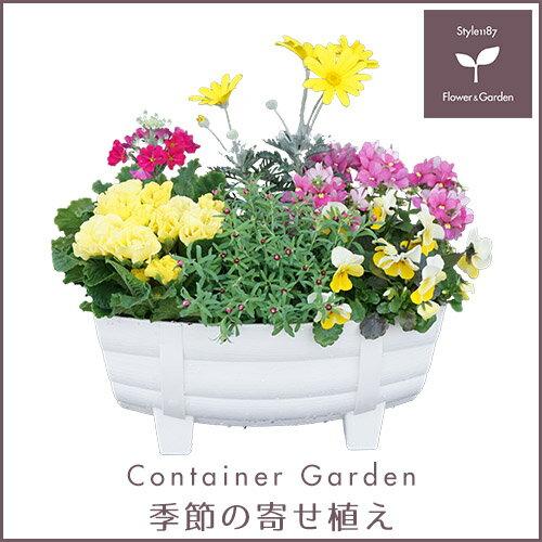 【送料無料】季節の寄せ植え タル型鉢 白 冬 ギフトにも最適な季節のお花を寄せ植えに♪ 【プレゼント ブリキピック 玄関 ベランダ】